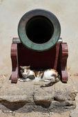 Cannon und katze — Stockfoto