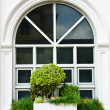 Stock Photo: White window with bush