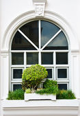 White window with bush — Stock Photo