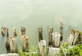 Stumps — Stock Photo