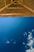 Sole umbrela — Foto Stock