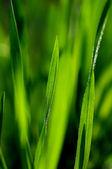 Groen gras zomer achtergrond — Stockfoto