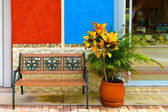 Flower, wall. and bench — Stock Photo
