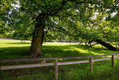 Wood fence and trees — Stock Photo