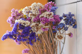 Colorful dry flowes — Stock Photo