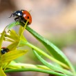 Red ladybug — Stock Photo #43382865