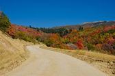 Strada sterrata d'autunno — Foto Stock