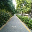 Green road, China's shenzhen — Stock Photo