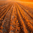 Plowed field crops — Stock Photo