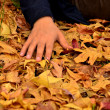 Human hand on autumn leaves — Stock Photo
