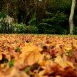 Autumn leaves and green trees together - Stock Photo