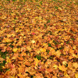 Yellow and red autumn leaves place covered — Stock Photo