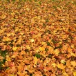 Yellow and red autumn leaves place covered — Stock Photo #14560365