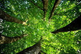 Long, thin dense forest of trees — Stock Photo