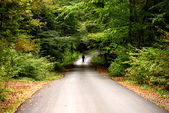 Man walking alone on the road in the forest — Stock Photo