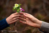 Child's hand giving flowers to his father — Stock Photo