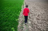 Boy walking and green agricultural with barren field — Stock Photo