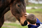 Horse and lovely boy - best friends — Stock Photo