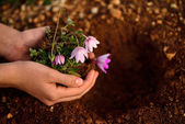 Flower planting soil — Stock Photo