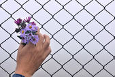 Wire fence holding hands and background — Stock Photo