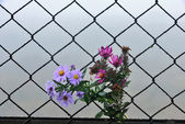 Wire fence flower and background — Stock Photo