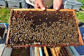 Honey frame — Stock Photo