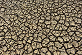 Dry Cracked Earth - Drought — Stock Photo