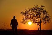 Sagoma di un albero e un uomo in sfondo tramonto — Foto Stock