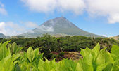 Volcano Mount Pico at Pico island 02 — Stock Photo
