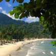 Beach of the Maracas Bay  Trinidad - Stock Photo