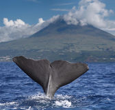 Big fin of a sperm whale in front of volcano Pico, Azores islands — Stockfoto