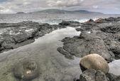 Küste in der nähe von madalena insel pico, azoren — Stockfoto