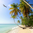 Stock Photo: Palm beach with frigate-bird