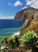 Cliff Cabo Girao at southern coast of Madeira Portugal 02 — 图库照片