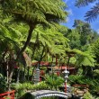 Tropical Garden in Funchal (Madeira, Portugal) — Stock Photo