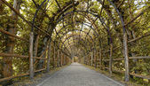 Garden-Way as an arbour of hornbeam — Stock Photo