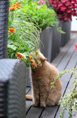 Modern terrace with cat and flowers — Stock Photo