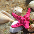 Stock Photo: Pink starfish and shells on the beach