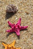Pink starfish and shells on the beach — Stock Photo