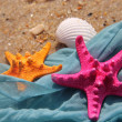 Funny starfishes on the beach — Stockfoto
