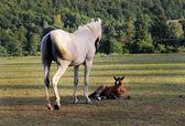 Equinos — Fotografia Stock