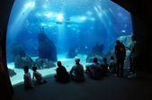 Underwater sea life — Stock Photo