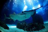 Vida subaquática do mar — Foto Stock