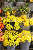 смесь яркие свежие красивые цветы — Стоковое фото