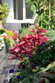 露台和鲜花 — Stockfoto