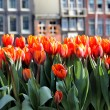 Royalty-Free Stock Photo: Amsterdam in tulips
