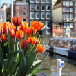 Stock Photo: Amsterdam in tulips