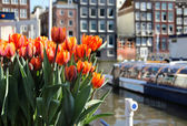 Amsterdam in tulips — Stock Photo