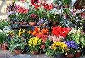 Terraço ensolarado com um monte de flores — Fotografia Stock