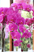 Beautiful pink and violet orchids — Stock Photo